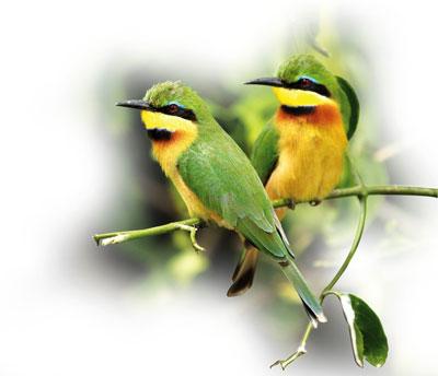 Beeeater Djuma Game Reserve