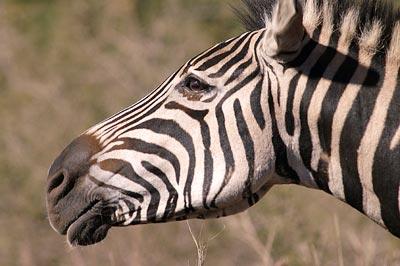 Zebra Djuma Game Reserve