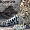 Bobby Hampton Induna named